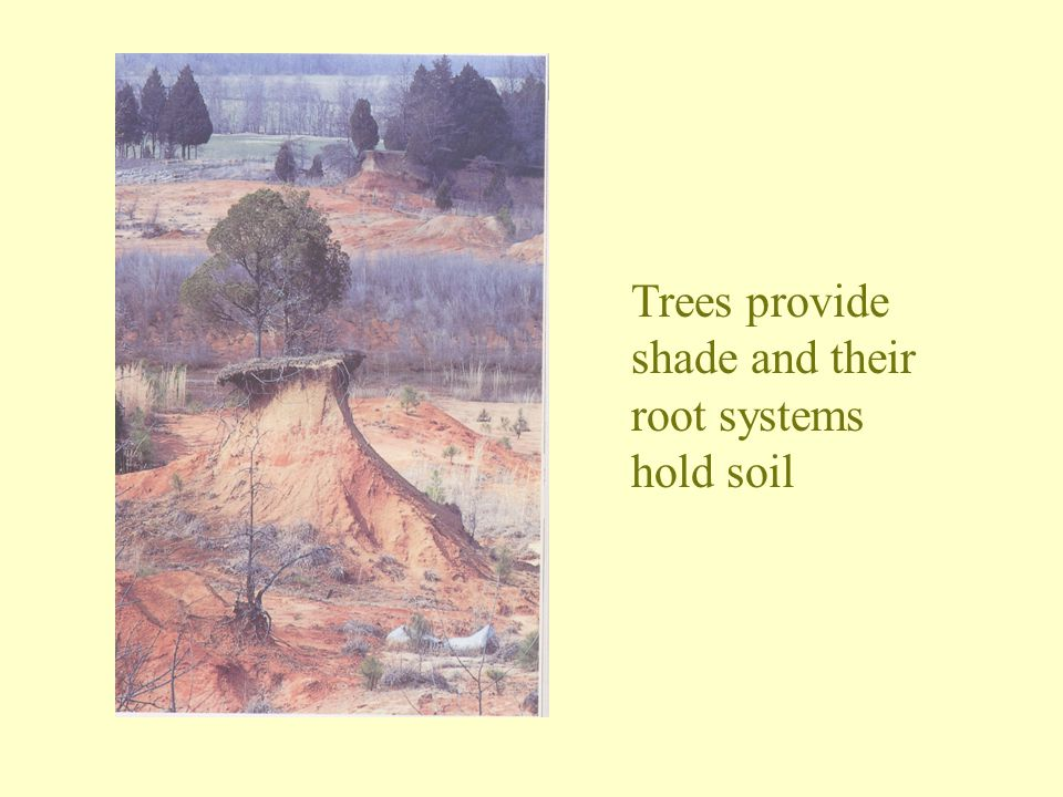 Trees provide shade and their root systems hold soil