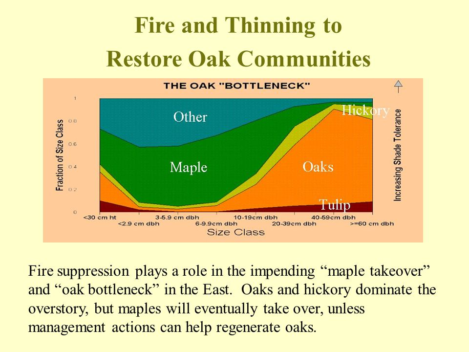 Restore Oak Communities