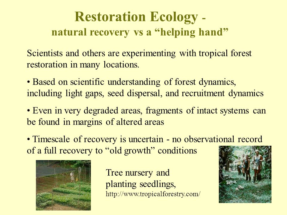Restoration Ecology - natural recovery vs a helping hand