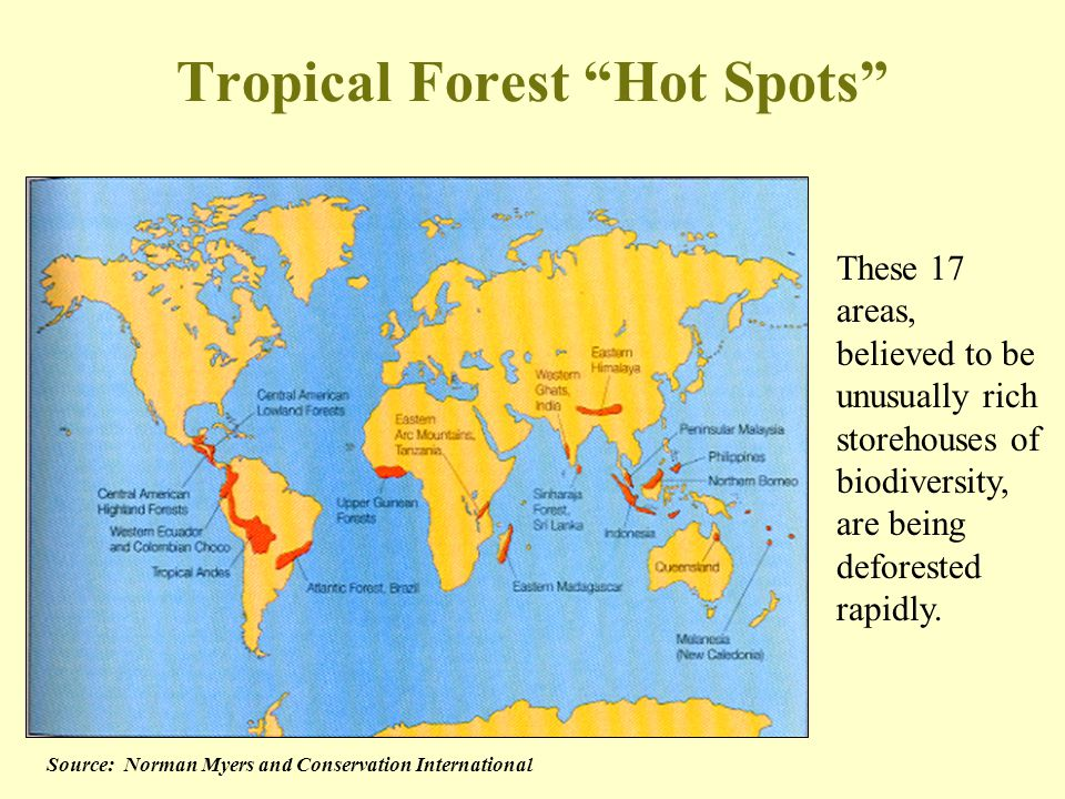 Tropical Forest Hot Spots