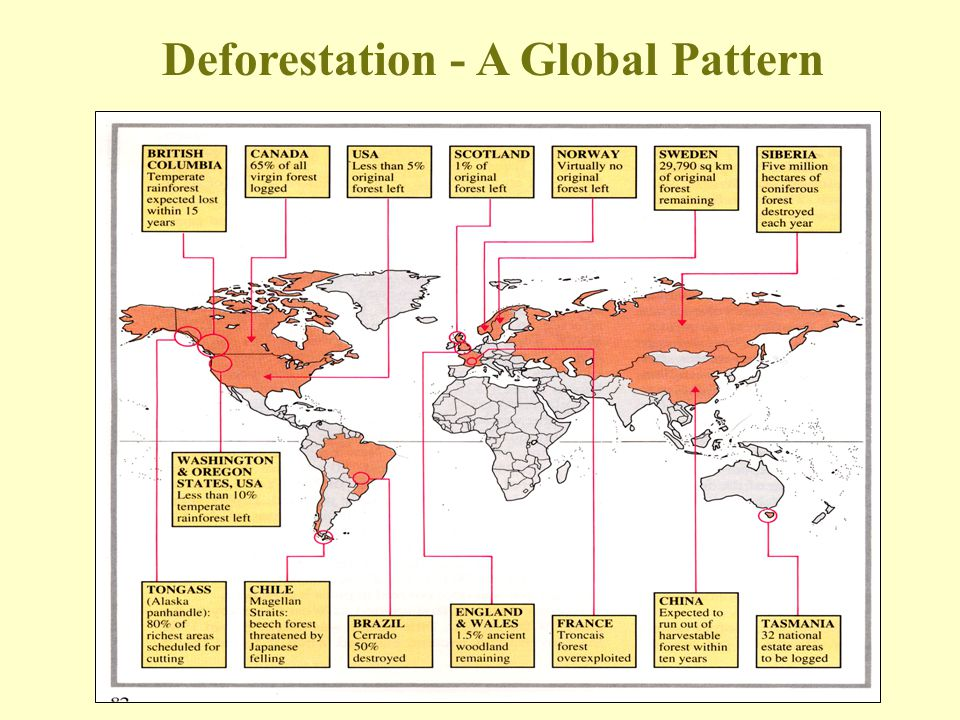 Deforestation - A Global Pattern