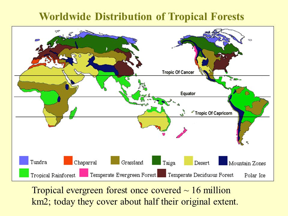 Worldwide Distribution of Tropical Forests