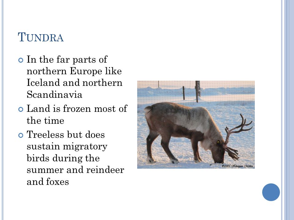 Tundra In the far parts of northern Europe like Iceland and northern Scandinavia. Land is frozen most of the time.