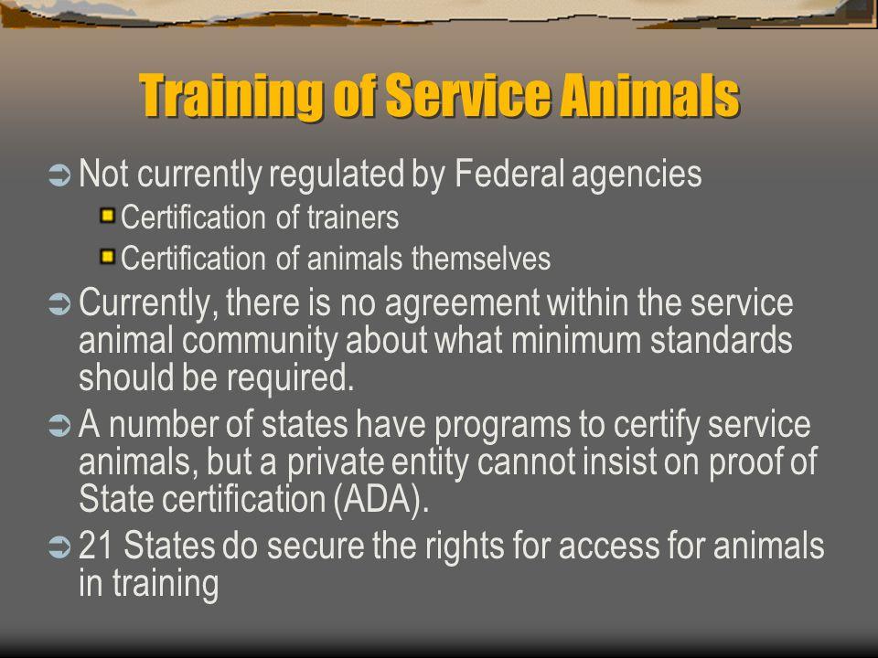 Training of Service Animals