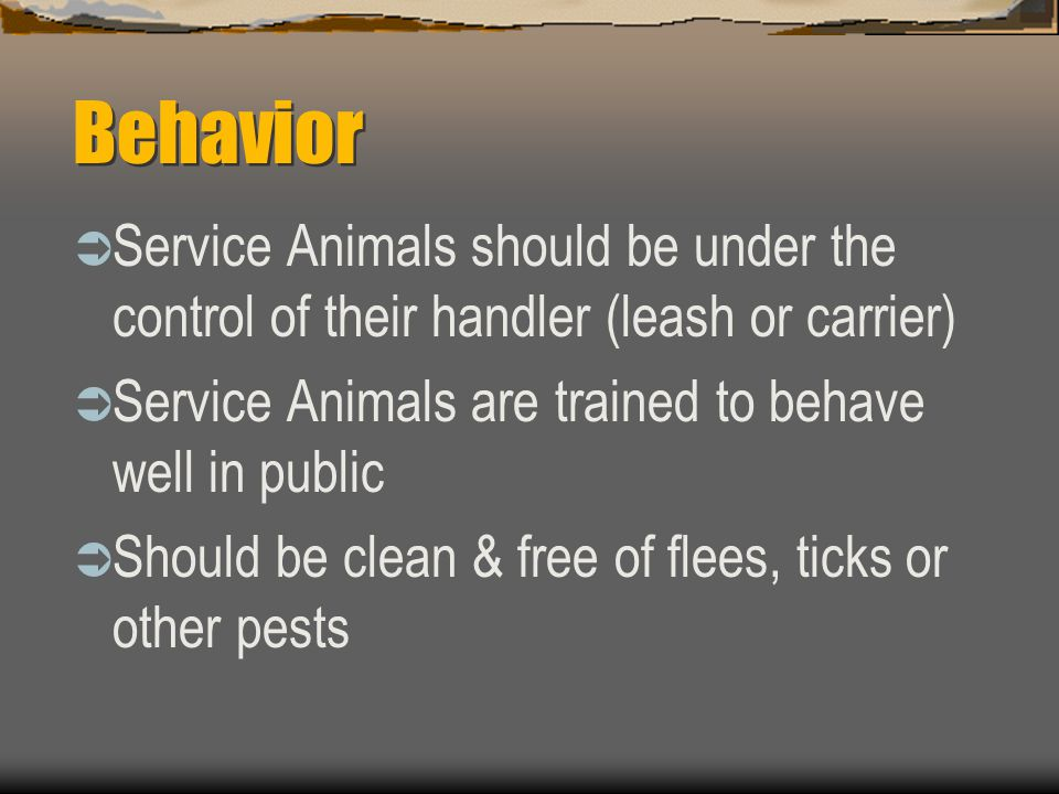 Behavior Service Animals should be under the control of their handler (leash or carrier) Service Animals are trained to behave well in public.