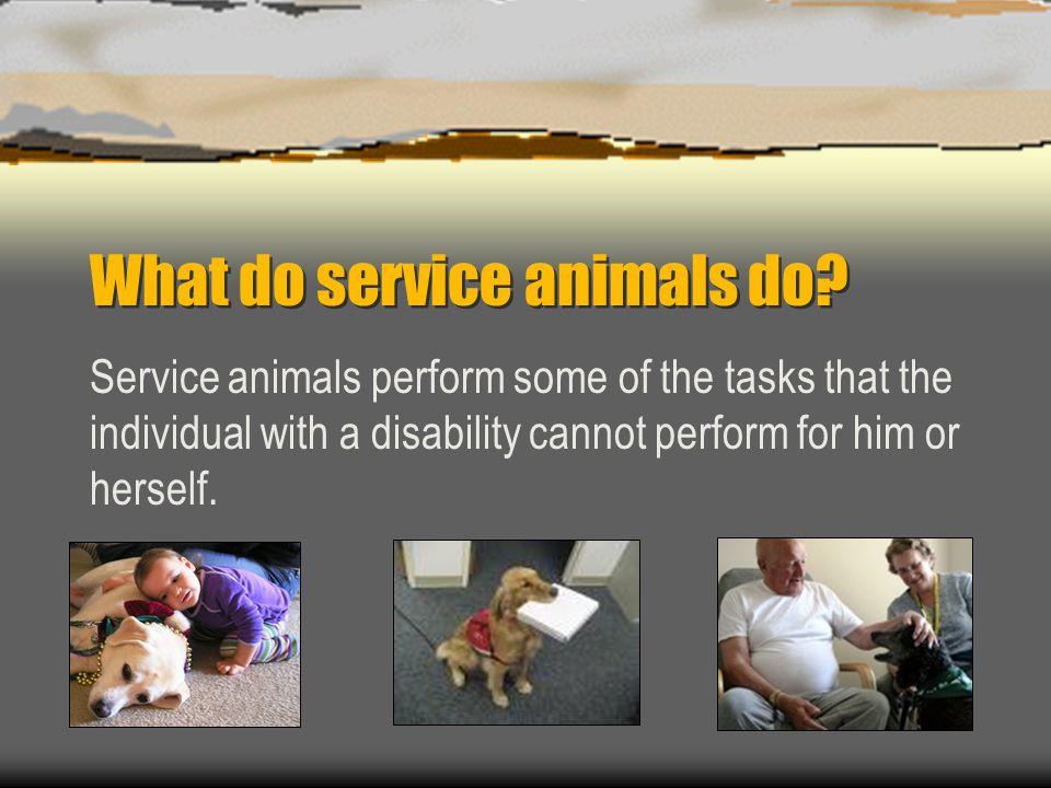 What do service animals do