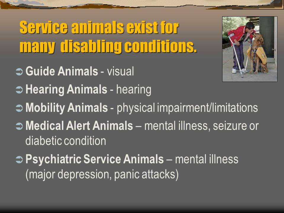 Service animals exist for many disabling conditions.