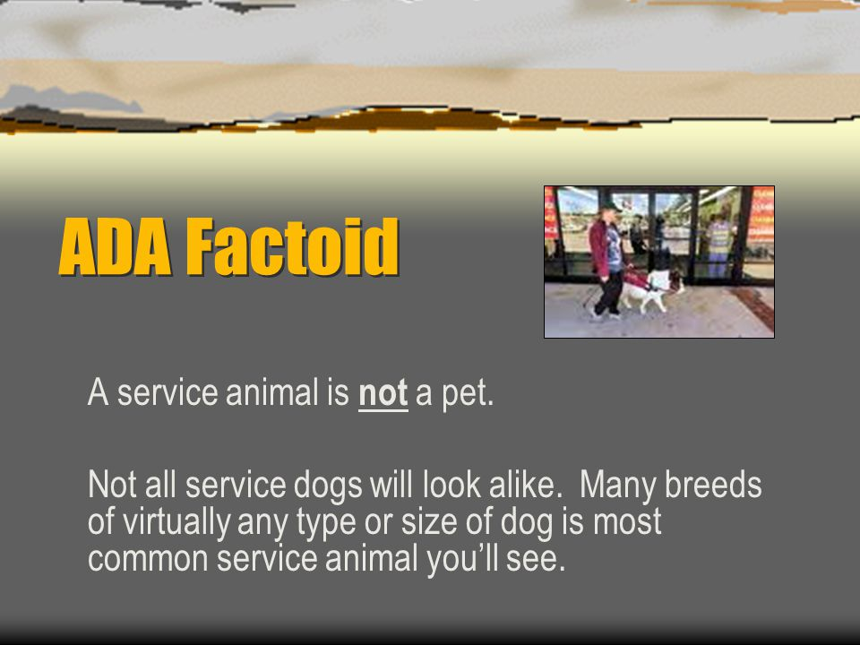 ADA Factoid A service animal is not a pet.