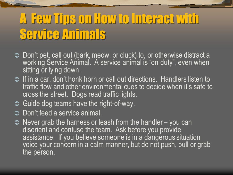 A Few Tips on How to Interact with Service Animals