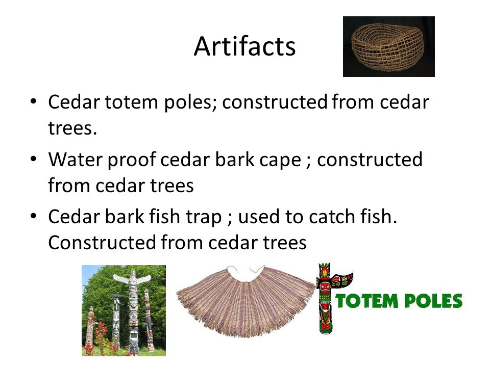 Artifacts Cedar totem poles; constructed from cedar trees.
