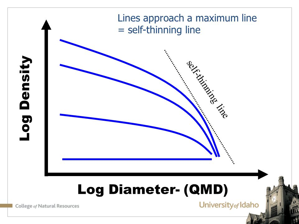 Log Density Log Diameter- (QMD) Lines approach a maximum line