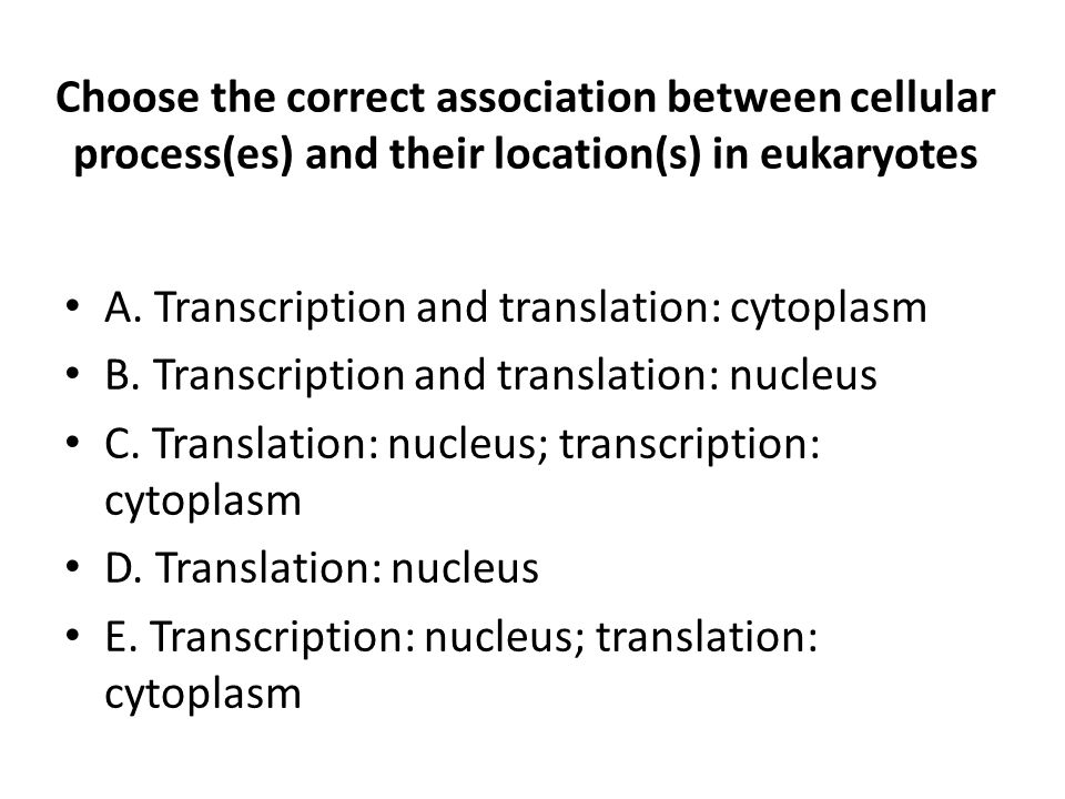 A. Transcription and translation: cytoplasm