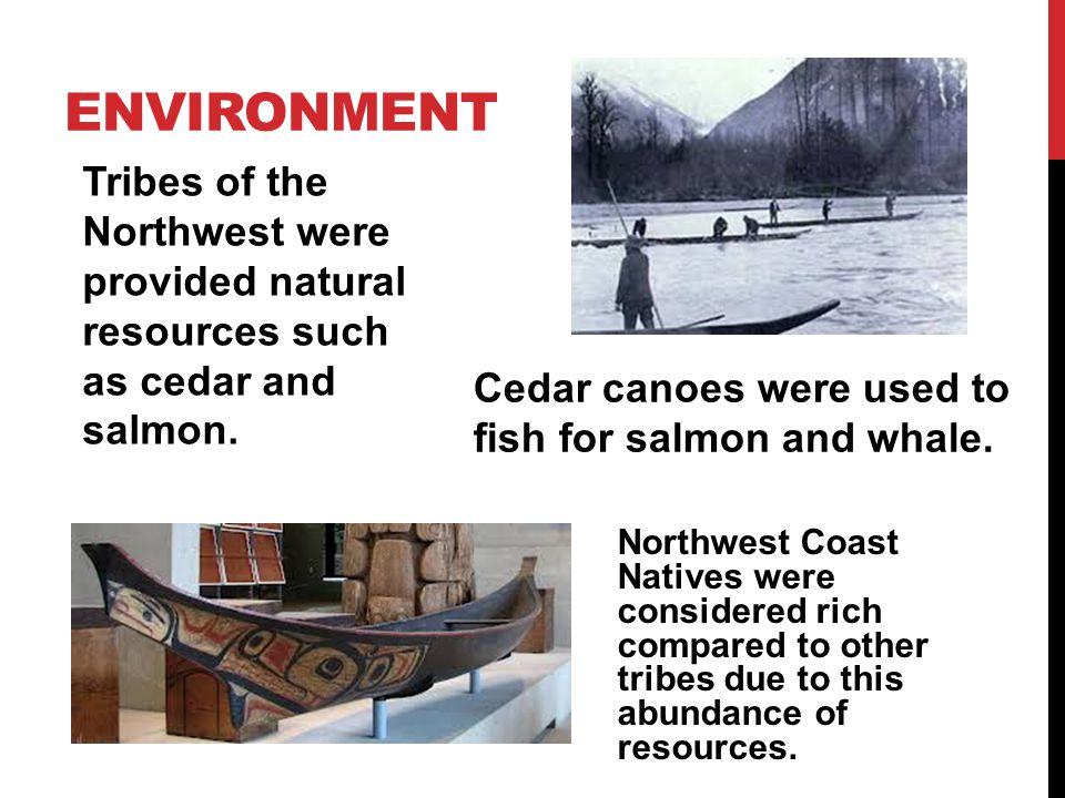 Environment Tribes of the Northwest were provided natural resources such as cedar and salmon.