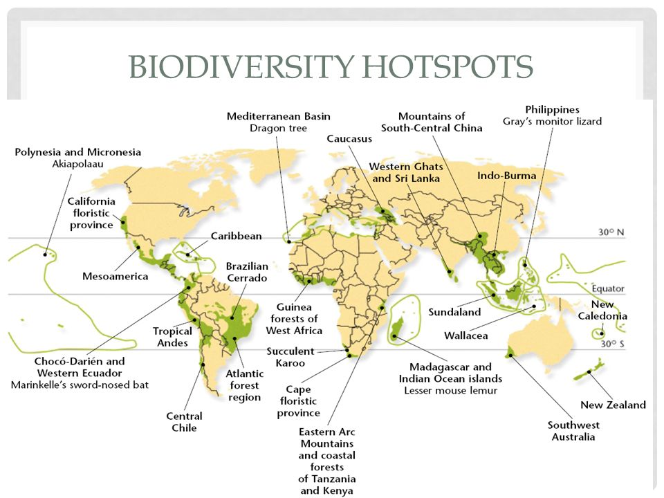 biodiversity hotspots If you're behind a web filter, please make sure that the domains kastaticorg and kasandboxorg are unblocked.