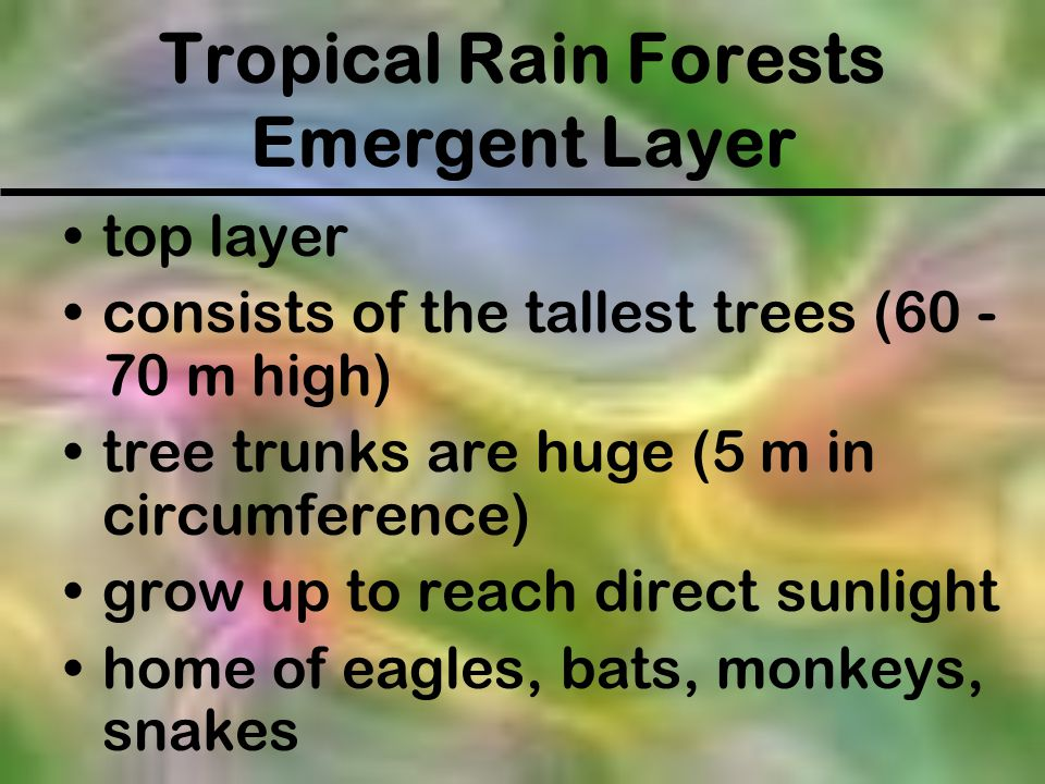 Tropical Rain Forests Emergent Layer