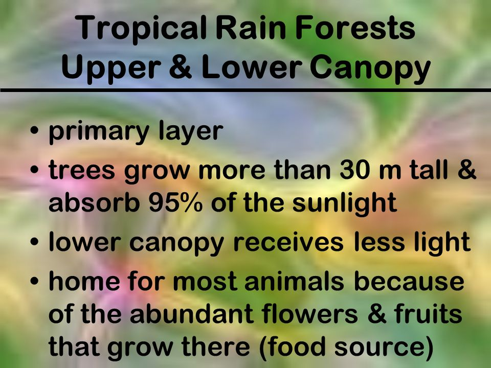 Tropical Rain Forests Upper & Lower Canopy