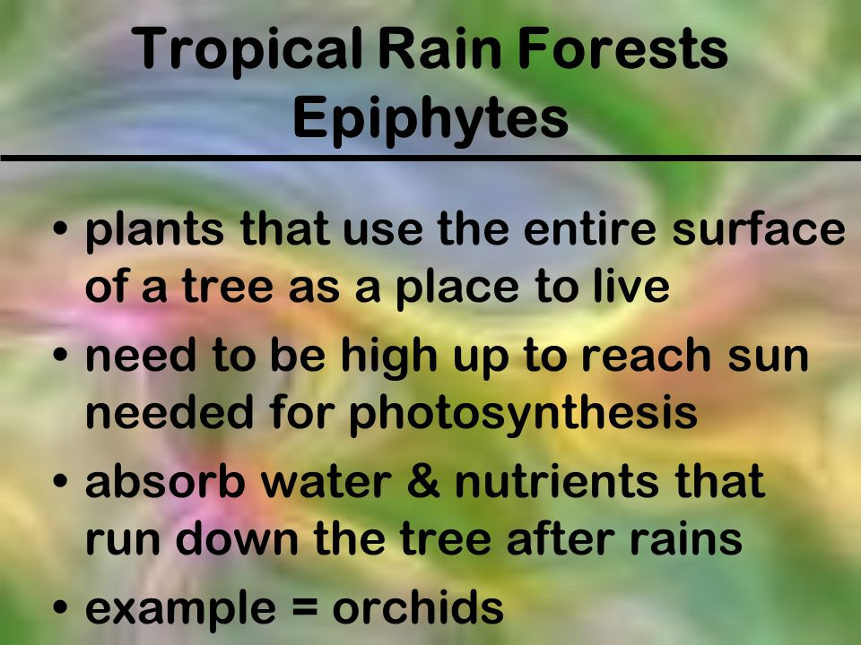 Tropical Rain Forests Epiphytes
