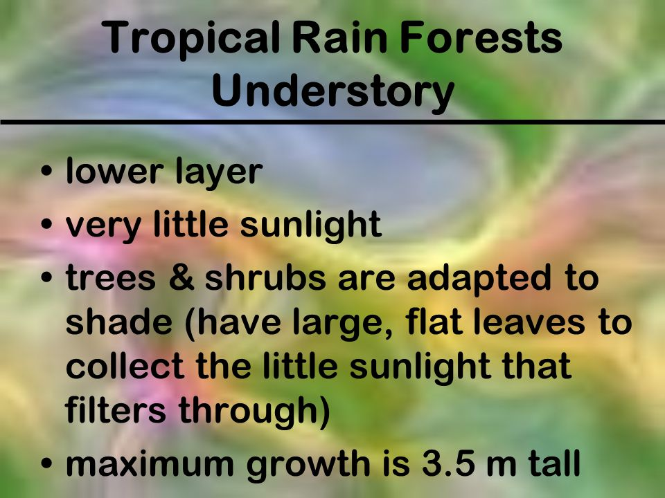 Tropical Rain Forests Understory