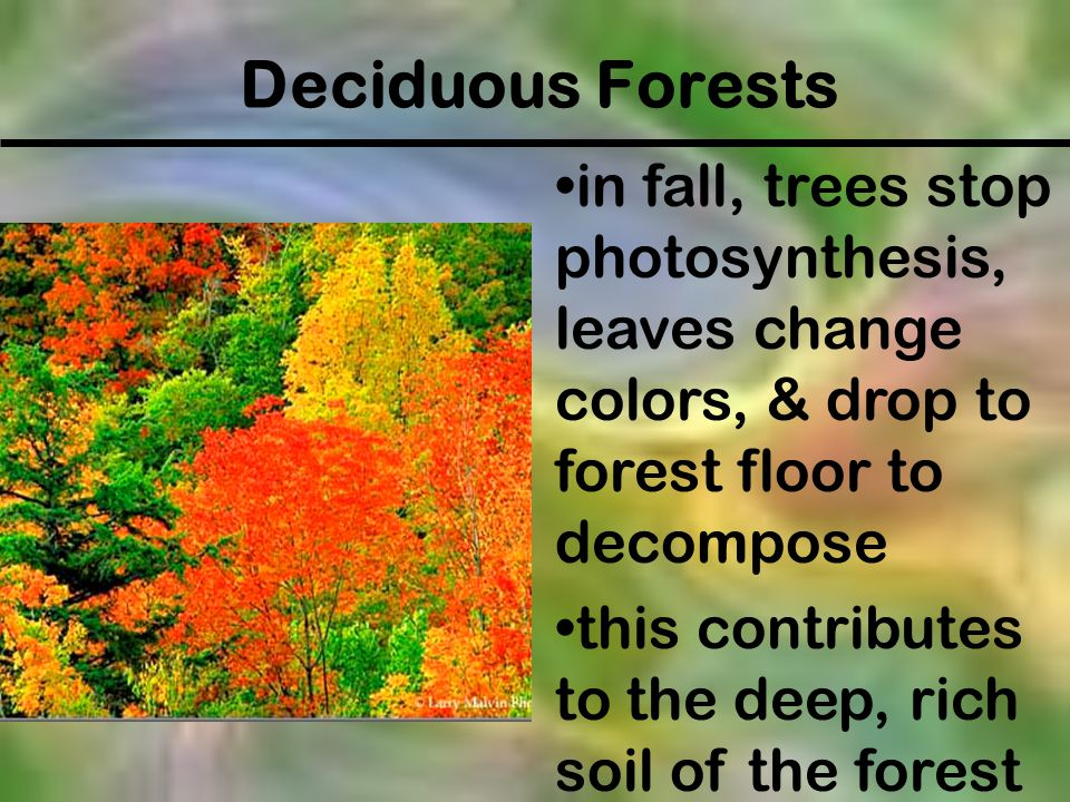 Deciduous Forests in fall, trees stop photosynthesis, leaves change colors, & drop to forest floor to decompose.