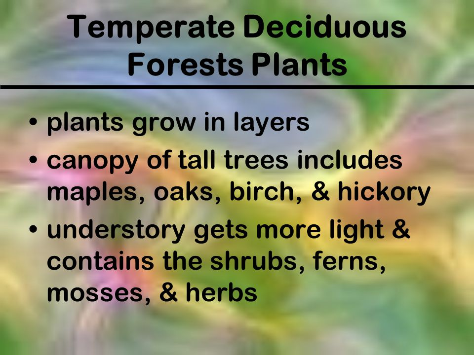 Temperate Deciduous Forests Plants