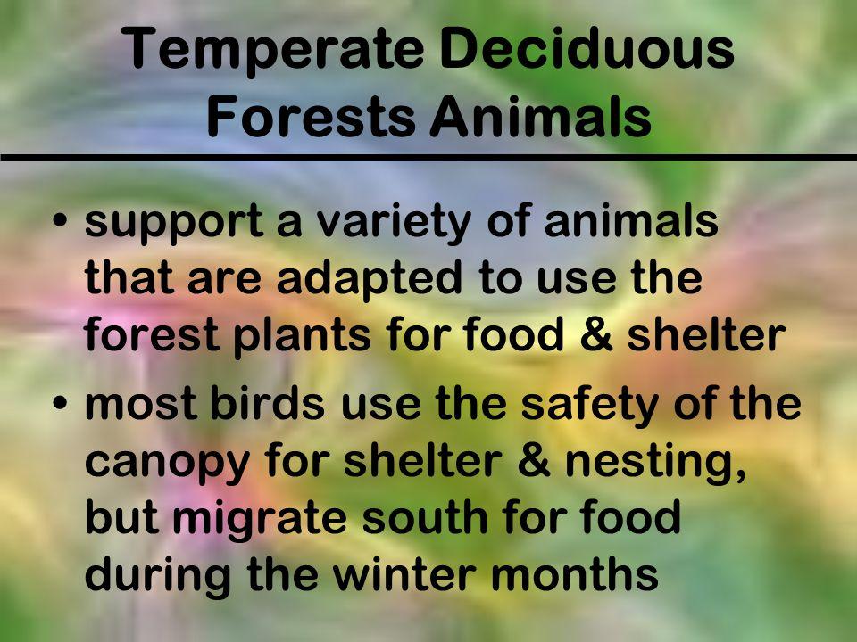 Temperate Deciduous Forests Animals