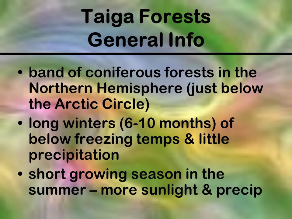 Taiga Forests General Info