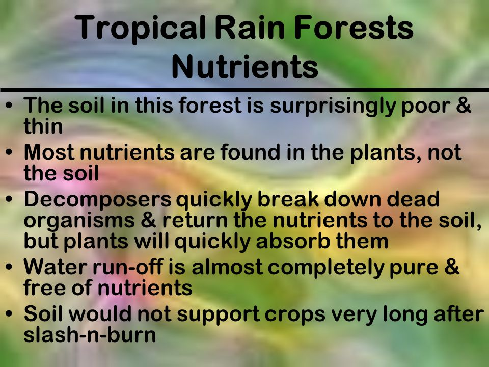 Tropical Rain Forests Nutrients