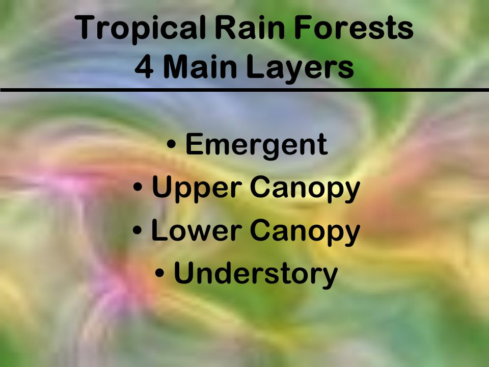 Tropical Rain Forests 4 Main Layers