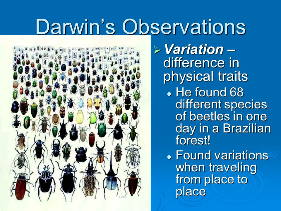 Darwin's Observations