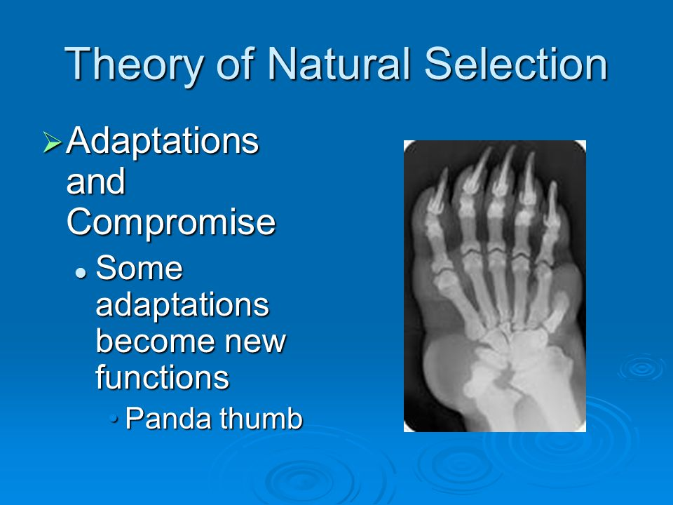 Theory of Natural Selection