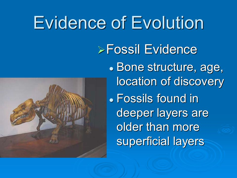 Evidence of Evolution Fossil Evidence