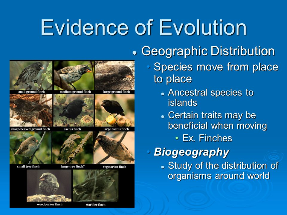 Evidence of Evolution Geographic Distribution
