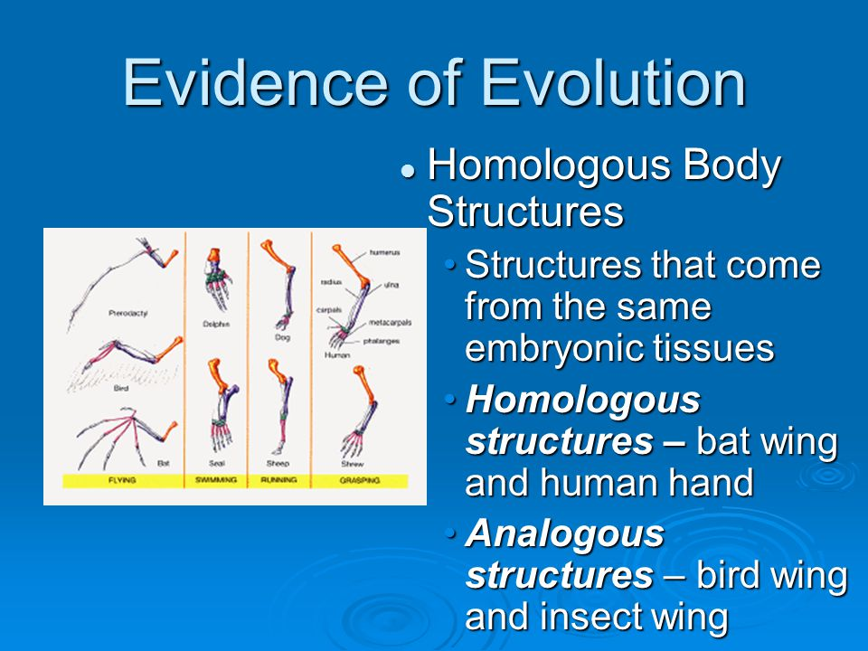 Evidence of Evolution Homologous Body Structures