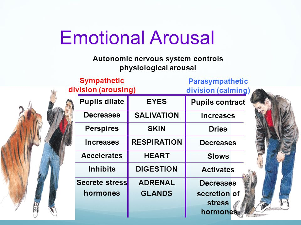 Autonomic nervous system controls physiological arousal