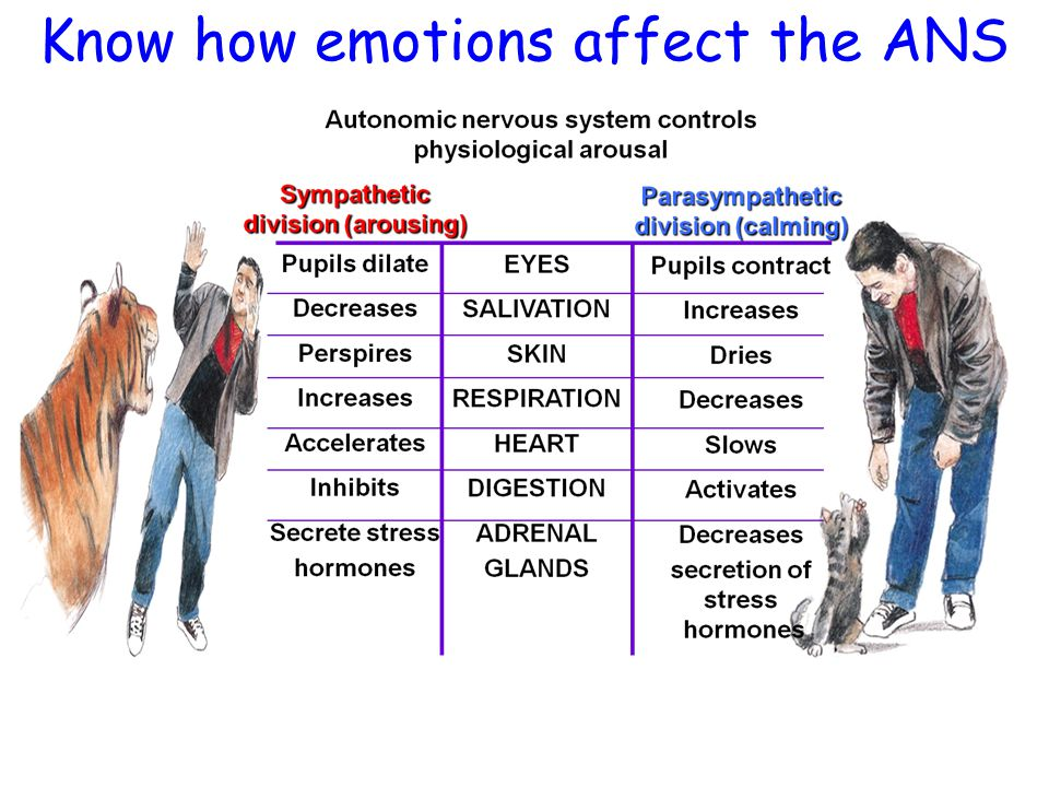 Know how emotions affect the ANS