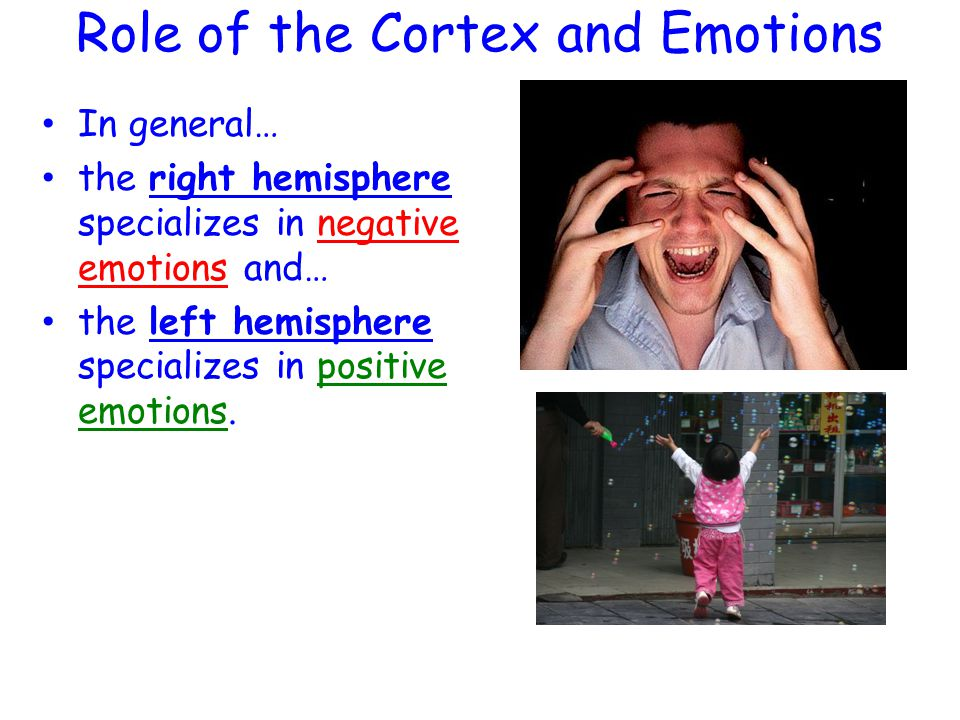 Role of the Cortex and Emotions
