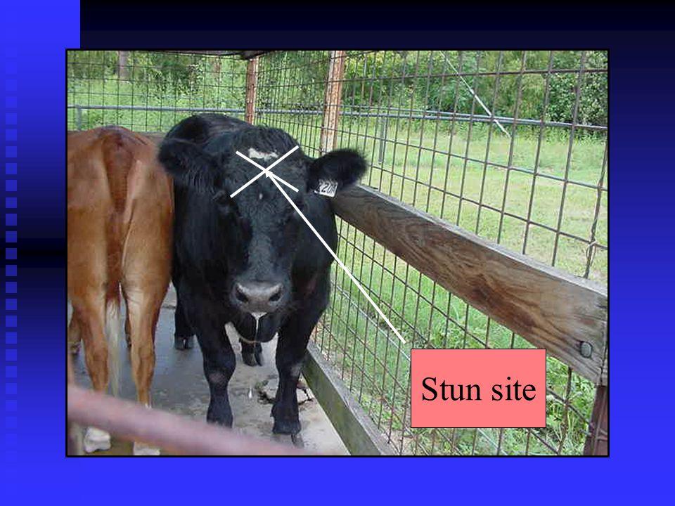 Stun site