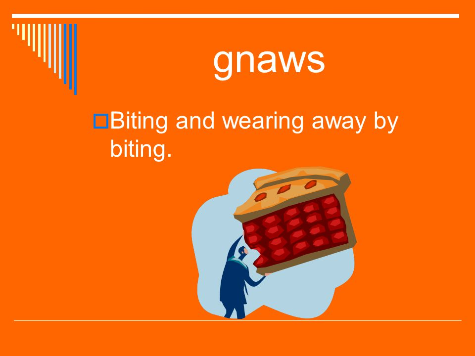 gnaws Biting and wearing away by biting.
