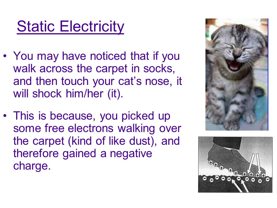 Static Electricity You may have noticed that if you walk across the carpet in socks, and then touch your cat's nose, it will shock him/her (it).