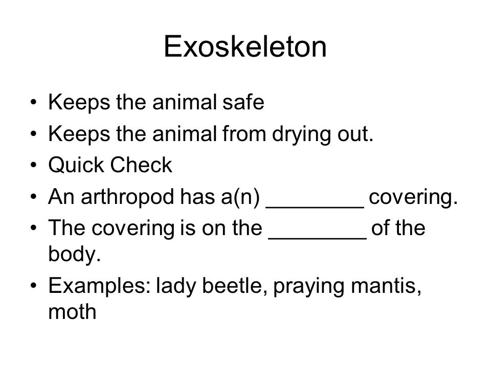 Exoskeleton Keeps the animal safe Keeps the animal from drying out.