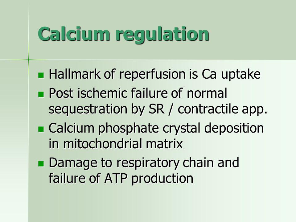 Calcium regulation Hallmark of reperfusion is Ca uptake