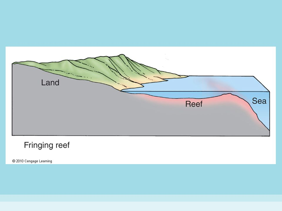 Figure 15-11 (a) TYPES OF CORAL REEFS.