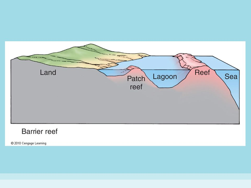 Figure 15-11 (b) TYPES OF CORAL REEFS.