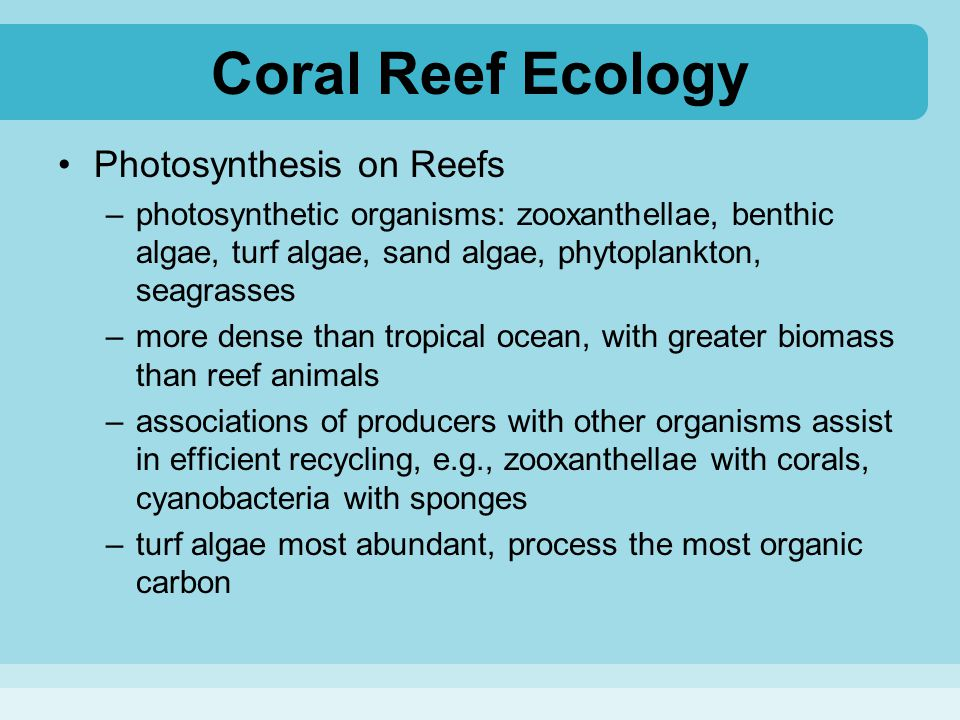 Coral Reef Ecology Photosynthesis on Reefs