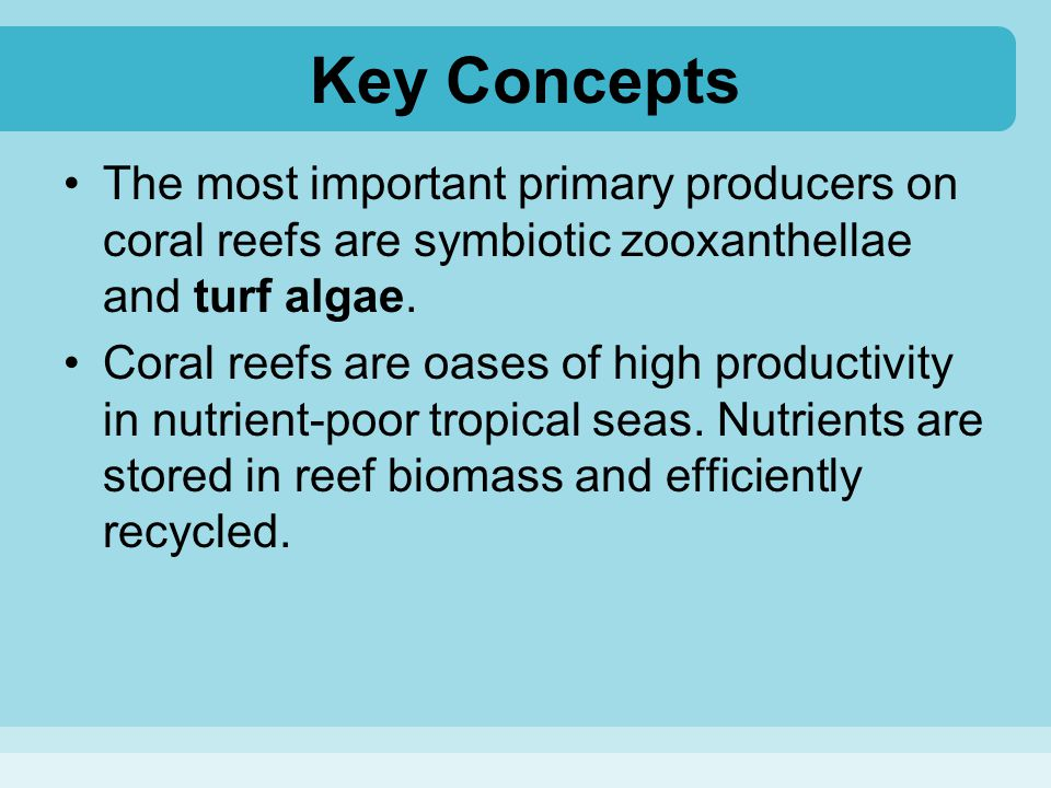 Key Concepts The most important primary producers on coral reefs are symbiotic zooxanthellae and turf algae.