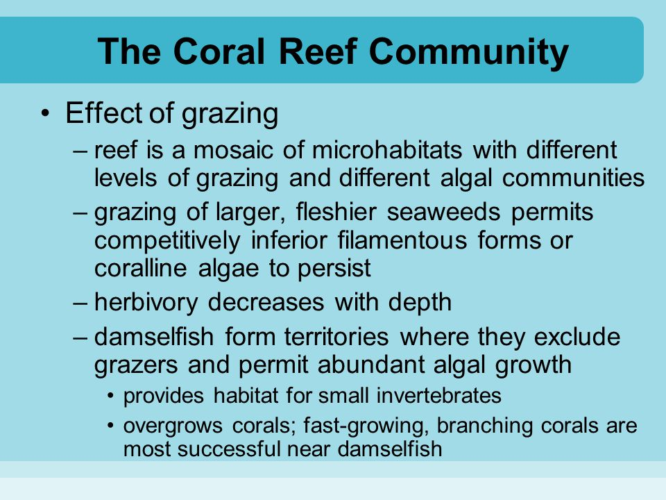 The Coral Reef Community