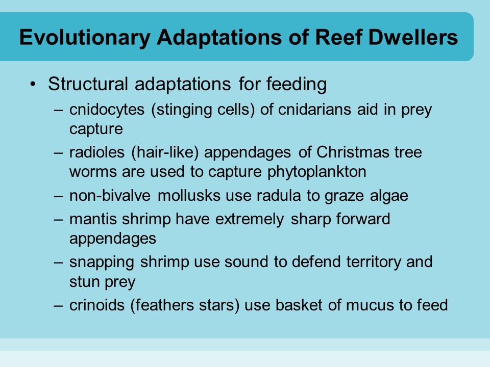 Evolutionary Adaptations of Reef Dwellers