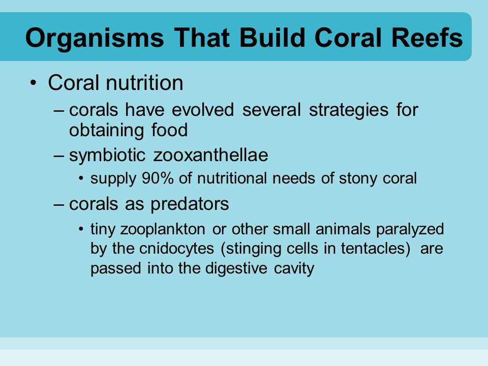 Organisms That Build Coral Reefs