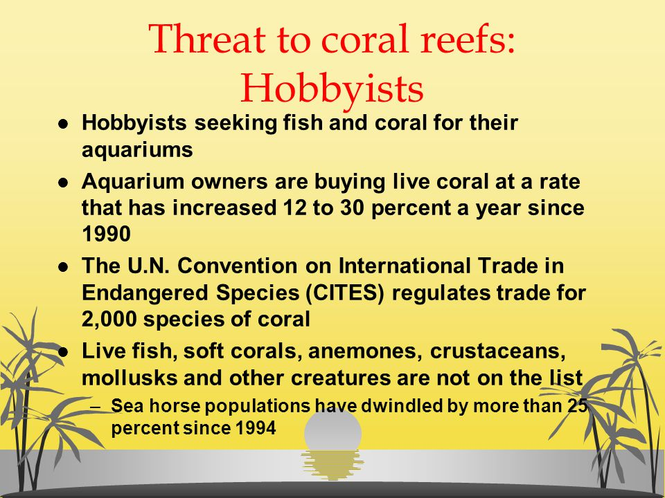 Threat to coral reefs: Hobbyists