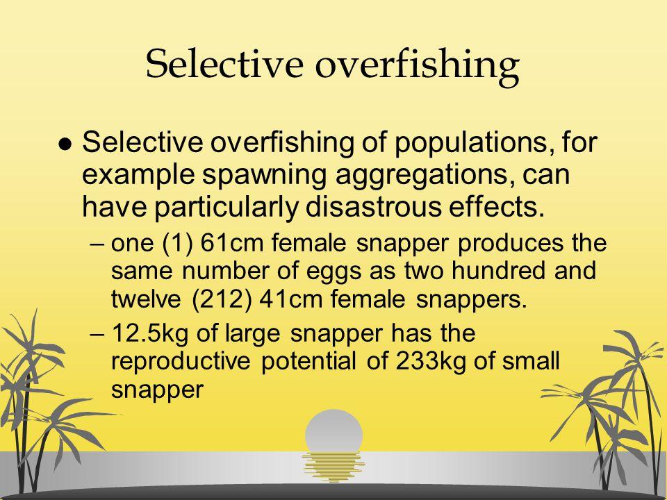 Selective overfishing